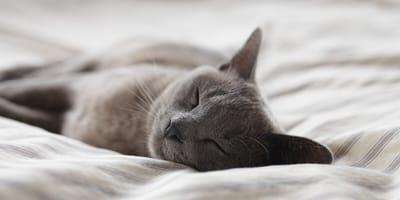 Hätten Sie lieber eine ruhige oder eine aktive Katze?