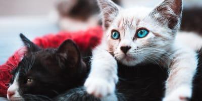Mach den Test: Welche Katzenrasse passt zu dir?