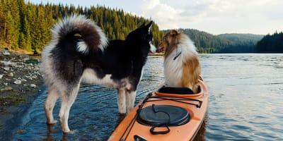 Wie aktiv soll Ihr Hund sein?