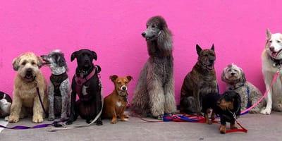Machen Sie den Test: Welche Hunderassen passen zu Ihnen?