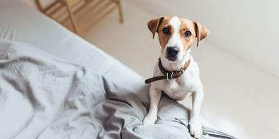 Wie lange wäre Ihr Hund täglich alleine?