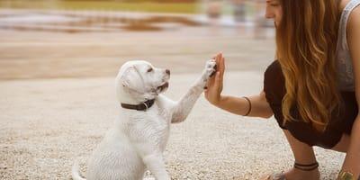 Wie gut kennen Sie sich mit Hunden aus?